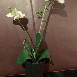Fake orchid with pot